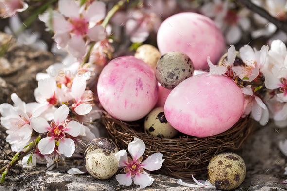 Easter eggs and blossom - Stock Photo - Images