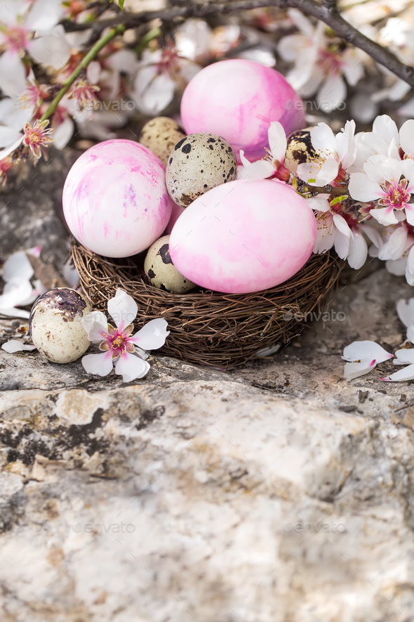 Easter eggs and blossom background - Stock Photo - Images