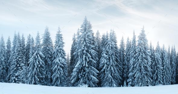 Fantastic winter landscape - Stock Photo - Images