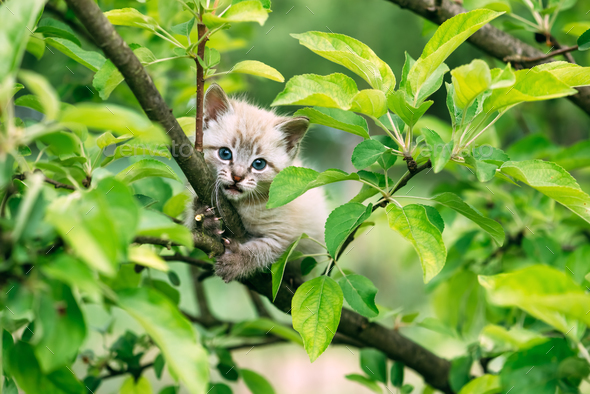 Small kitten with blue ayes on tree - Stock Photo - Images
