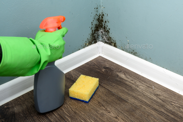 Spray bottle and sponge near black mould wall - Stock Photo - Images