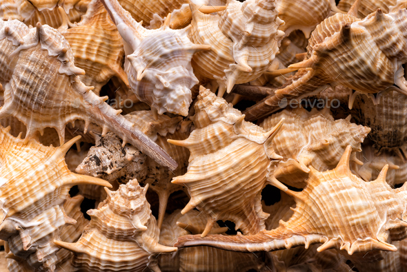 Seashells collection background - Stock Photo - Images