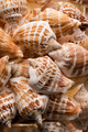 Seashells collection background - PhotoDune Item for Sale