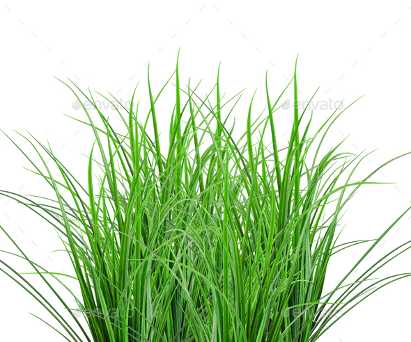 Green Grass isolated on white - Stock Photo - Images