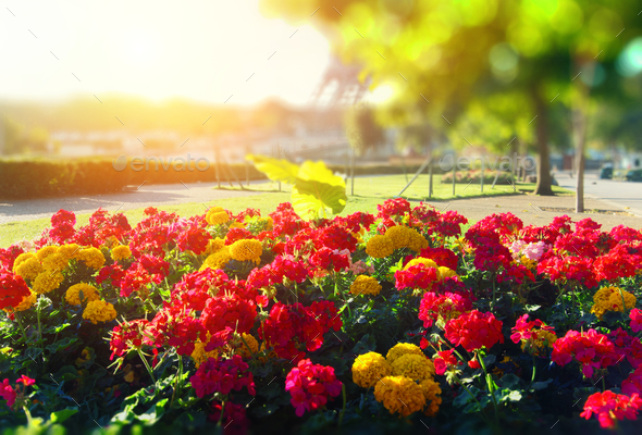 Bright flower bed - Stock Photo - Images