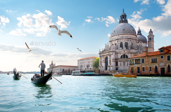 Gulls over Grand Canal - Stock Photo - Images