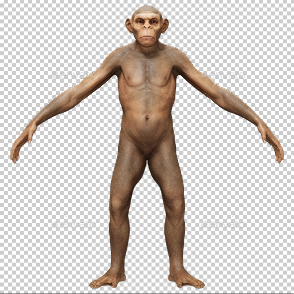 Evolution Homo Erectus Man 3D Portrait - Characters 3D Renders