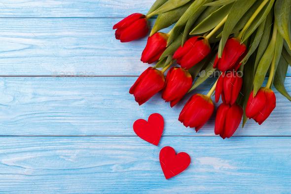 Tulips - Stock Photo - Images