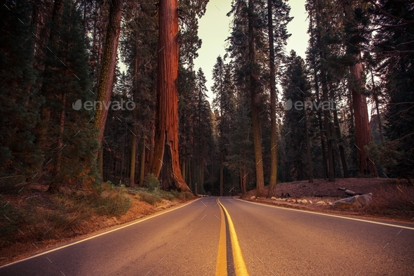 California Sierra Nevada Road - Stock Photo - Images