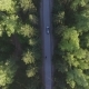 Panoramic Aerial View on Forest. Road From Above. Video Taken Using Drone. Top View on Trees. Way - VideoHive Item for Sale