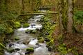 Oregon Rain Forest Mossy Green Babbling Brook - PhotoDune Item for Sale