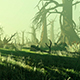 Panorama Of The Forest Growing In The Swamp - VideoHive Item for Sale