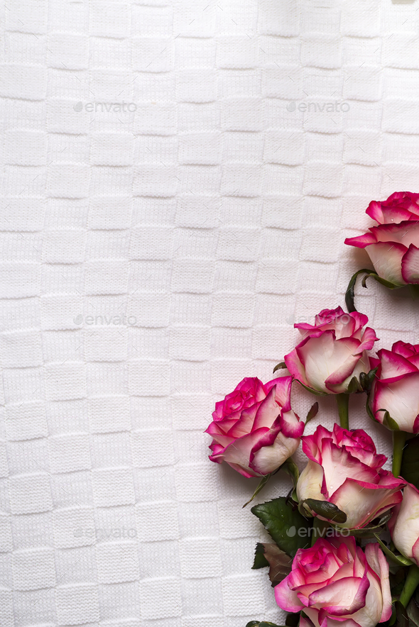 Roses frame on white background - Stock Photo - Images