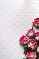 Roses frame on white background - PhotoDune Item for Sale