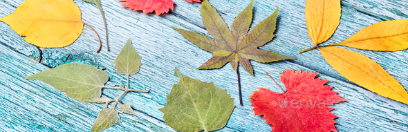 October leaves for herbarium - Stock Photo - Images