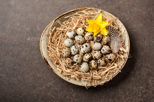 Easter background with quail eggs and spring flower  - Stock Photo - Images