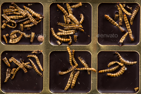 Chocolate with edible insects and worms, alternative food - Stock Photo - Images