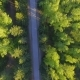 Aerial View on Forest Road from Above - VideoHive Item for Sale