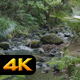 Small River in Tropical Forest - VideoHive Item for Sale
