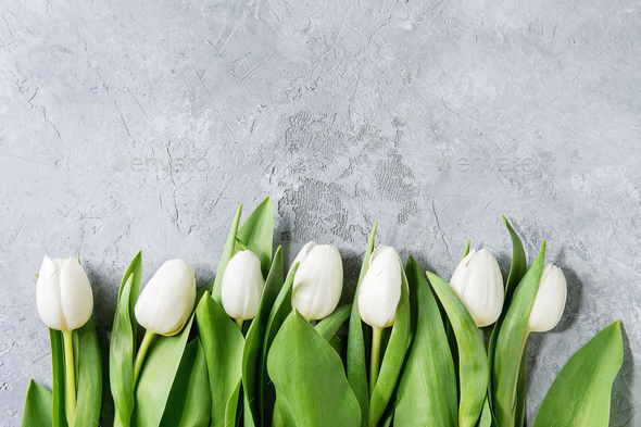 White tulips over grey - Stock Photo - Images