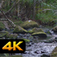 Creek in Jungle - VideoHive Item for Sale