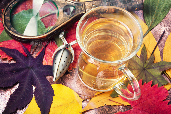 Cup of tea with autumn leaves - Stock Photo - Images