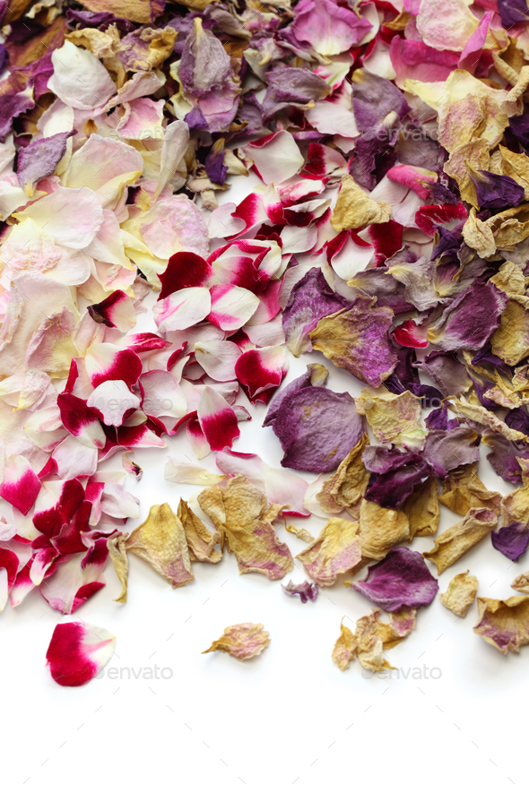 background of homemade dried rose petals - Stock Photo - Images
