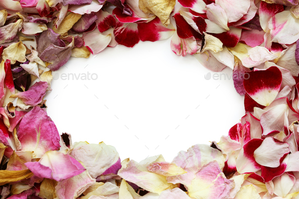 frame of homemade dried rose petals - Stock Photo - Images