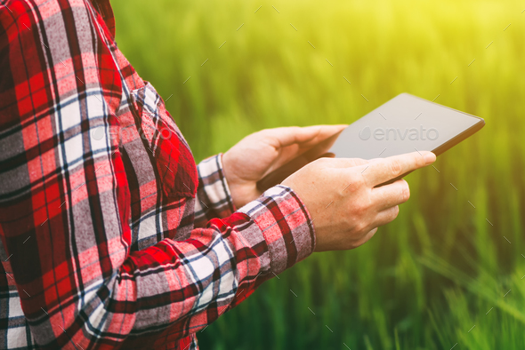 Female farmer using tablet computer in wheat crop field - Stock Photo - Images