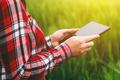 Female farmer using tablet computer in wheat crop field - PhotoDune Item for Sale