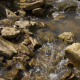 Fresh Creek Water in Forest - VideoHive Item for Sale