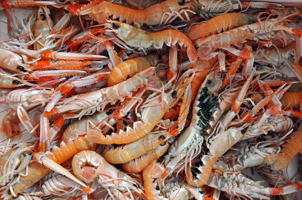 Orange fresh shrimp on fish market - Stock Photo - Images