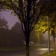 Traffic on Night Road with Street Lamps in Fog - VideoHive Item for Sale
