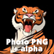 Big Tiger Lies and Growls - VideoHive Item for Sale