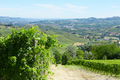 Green vineyards and vine plants in a sunny day in Italy - PhotoDune Item for Sale