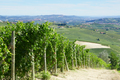 Green vineyards and Italian Langhe hills view in a sunny day - PhotoDune Item for Sale