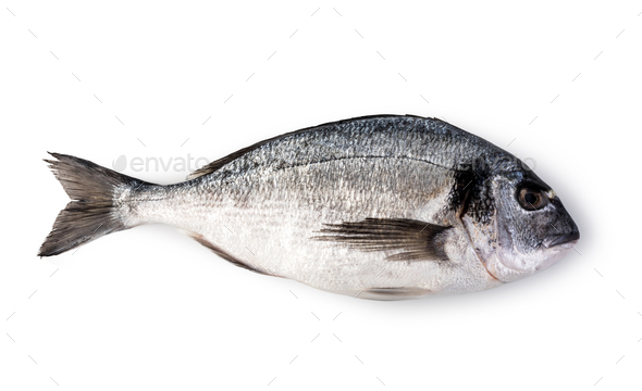 fresh dorado fish - Stock Photo - Images