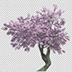 Flowering Cherry - VideoHive Item for Sale