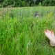 Female Legs with a Red Pedicure on Green Grass - VideoHive Item for Sale