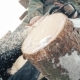 A Man with a Chainsaw Sawing a Pine Tree - VideoHive Item for Sale