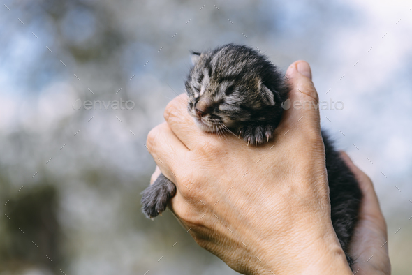 Newborn kitten in hands outdors - Stock Photo - Images
