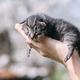Newborn kitten in hands outdors - PhotoDune Item for Sale