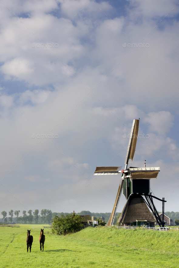 Horses in front of a windmill - Stock Photo - Images