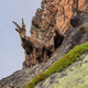 Ibex, Range of Mont Blanc, France - PhotoDune Item for Sale