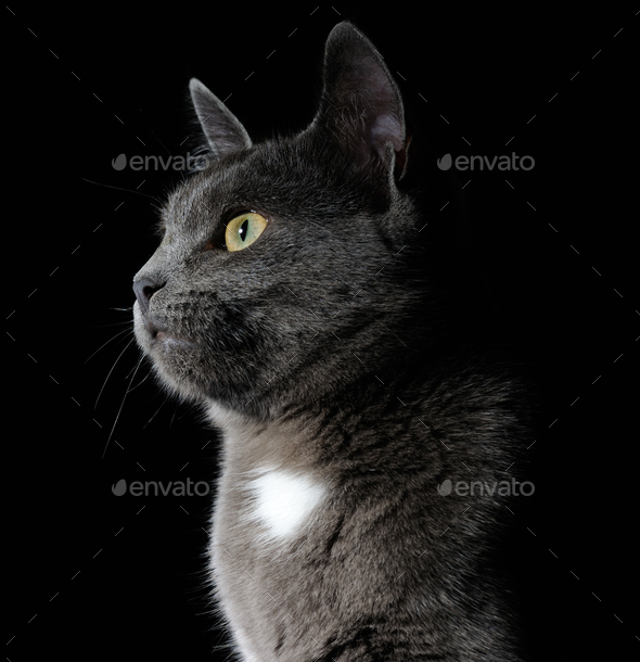 Cute grey cat - Stock Photo - Images