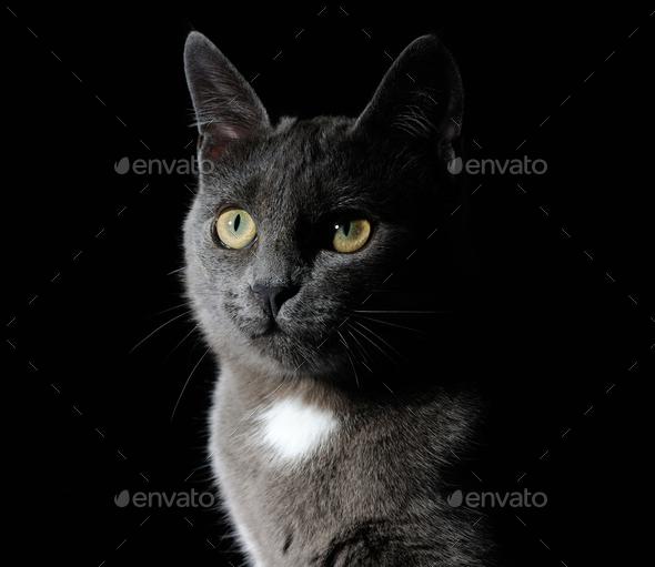 Cute grey cat - Stock Photo - Images