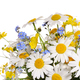 Spring flowers bouquet - PhotoDune Item for Sale