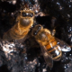 Honey Bees Eating Syrup on Tree - VideoHive Item for Sale