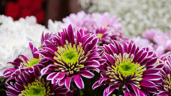 bouquet of chrysanthemum flowers - Stock Photo - Images