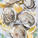 Raw Oysters - PhotoDune Item for Sale